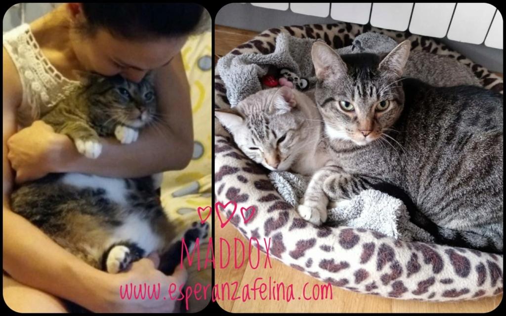 Maddox - Superviviente de la perrera en adopción (Alava, F.N 25/01/10) Whatsa12