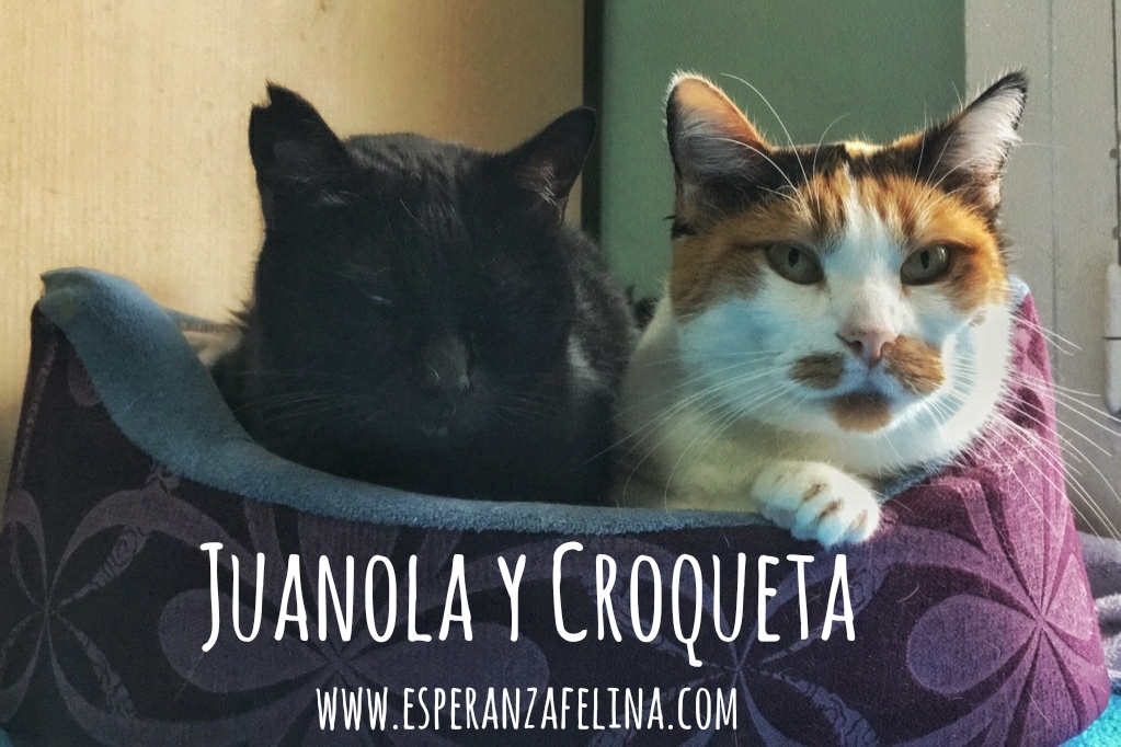 Croqueta y Juanola, preciosas abuelitas buscan hogar. Alava (FN: 02/08/2006; 14/06/2006) Whatsa18
