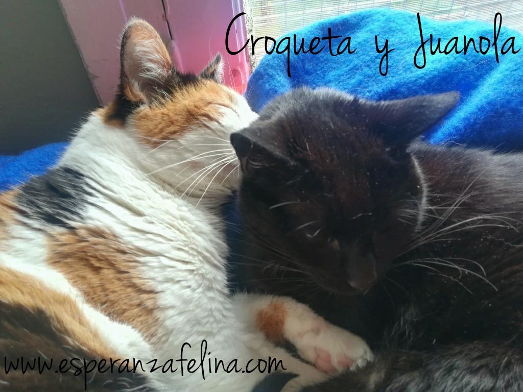 Croqueta y Juanola, preciosas abuelitas buscan hogar. Alava (FN: 02/08/2006; 14/06/2006) Whatsa24