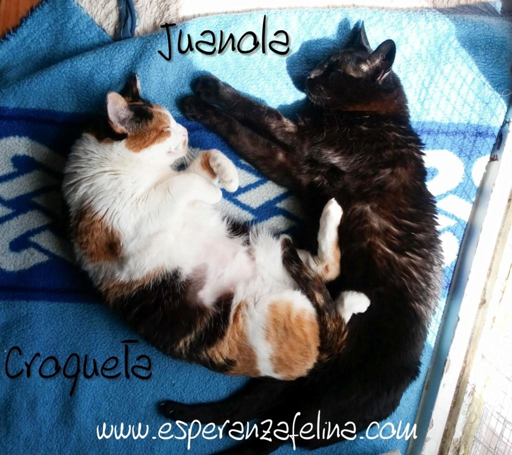 Croqueta y Juanola, preciosas abuelitas buscan hogar. Alava (FN: 02/08/2006; 14/06/2006) Whatsa25