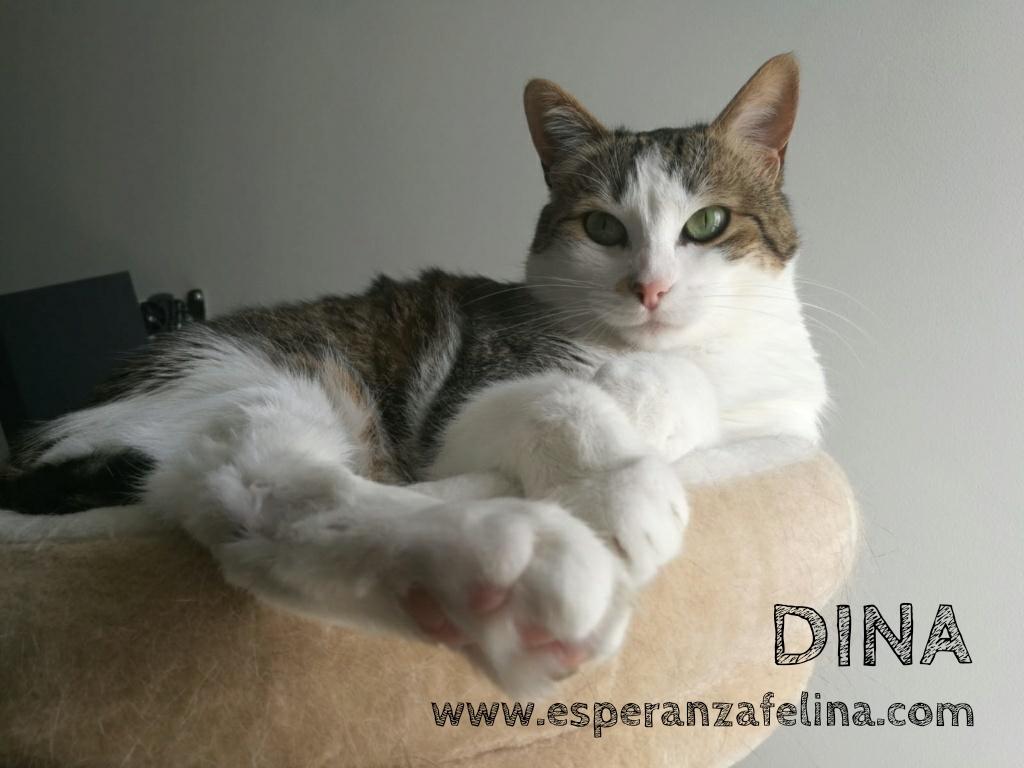 Dina, preciosa gata busca su hogar (Álava, fecha de nacimiento aproximada 10/04/2014 ) Whatsa31