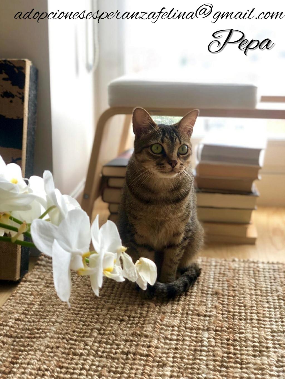 Pepa,preciosa gatita necesita hogar (f.n.aprox 28/04/13) Whatsa34