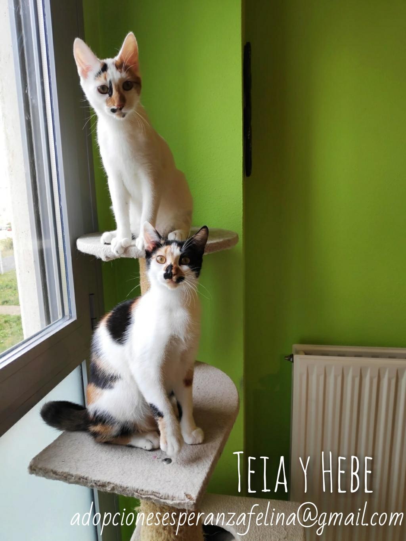 Teia y Hebe ,cachorros en adopción. Álava, España (f.n aprox 16/04/2019) Whatsa37