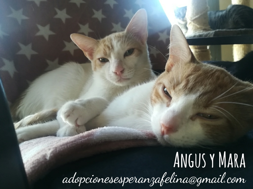 Mara y Angus, hermanitos divertidos buscan familia (Alava-España f.n.aprox 08/04/19) Whatsa38