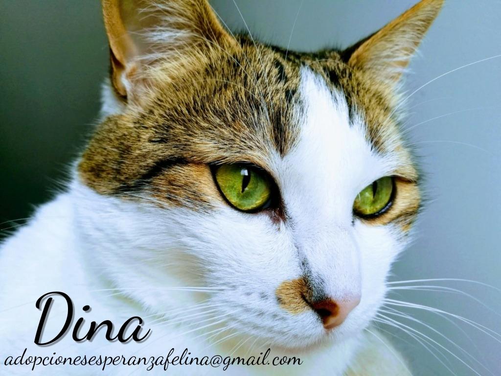 Dina, preciosa gata busca su hogar (Álava, fecha de nacimiento aproximada 10/04/2014 ) Whatsa39