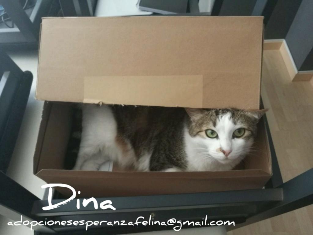 Dina, preciosa gata busca su hogar (Álava, fecha de nacimiento aproximada 10/04/2014 ) Whatsa42