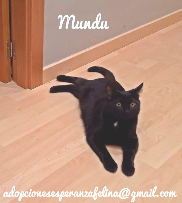 Mundu, en adopción. (f.n aprox 27/06/19)  Whatsa51