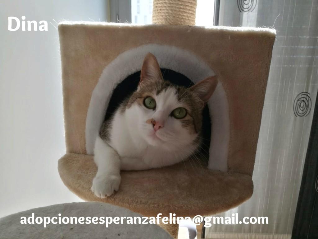 Dina, preciosa gata busca su hogar (Álava, fecha de nacimiento aproximada 10/04/2014 ) - Página 2 Whatsa53