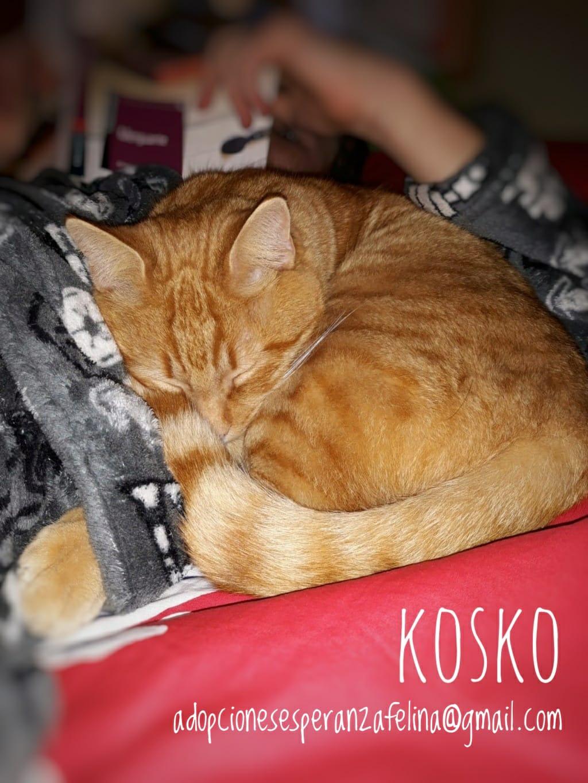 Kosko, rubiales en busca de hogar. (F. N. Aprox. 22/08/2018 Álava, Esp.) Whatsa55