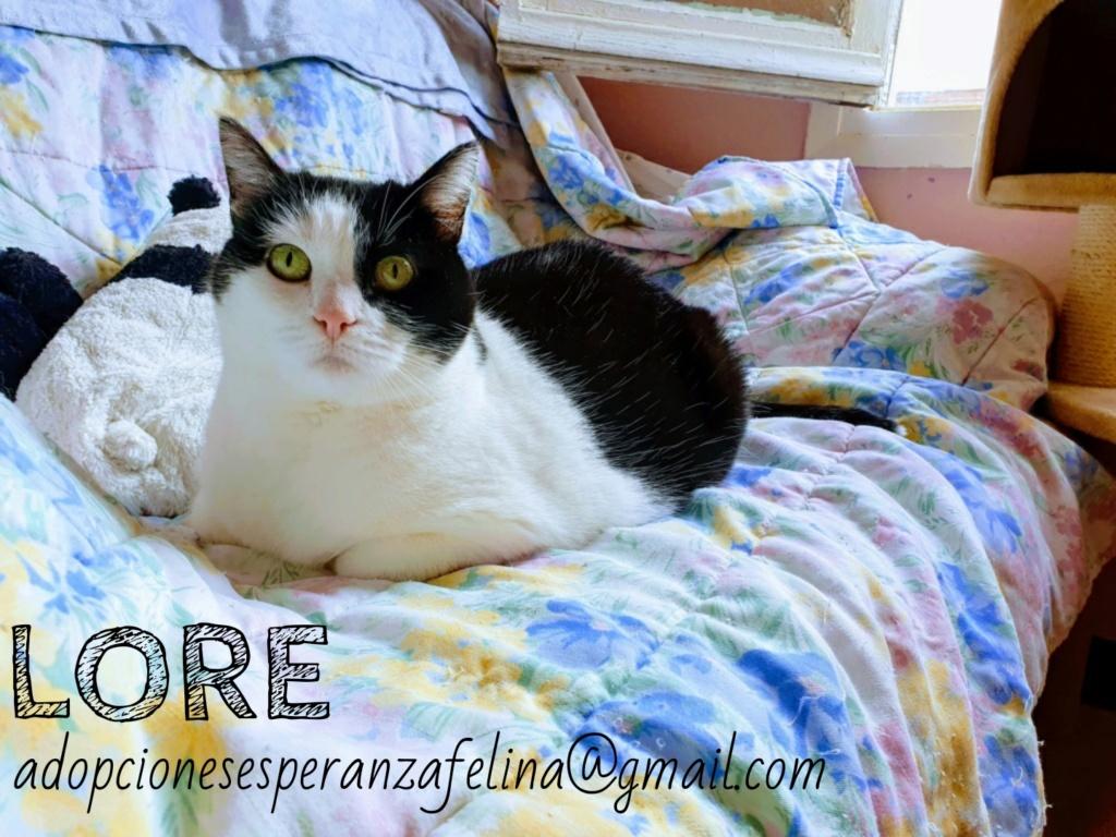 Lore, preciosa vaquita luchadora en adopción (Álava, F.N aprox. 2/04/12) Whatsa59