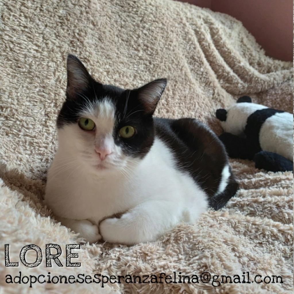 Lore, preciosa vaquita luchadora en adopción (Álava, F.N aprox. 2/04/12) Whatsa63