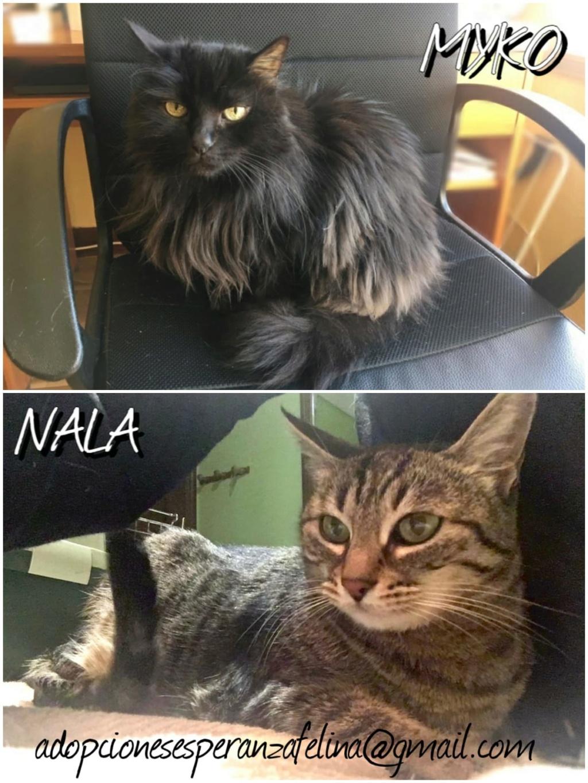 Myko y Nala, preciosas peques en adopción. Álava-España (F.N: 22/01/07 y 28/04/11) Whatsa69