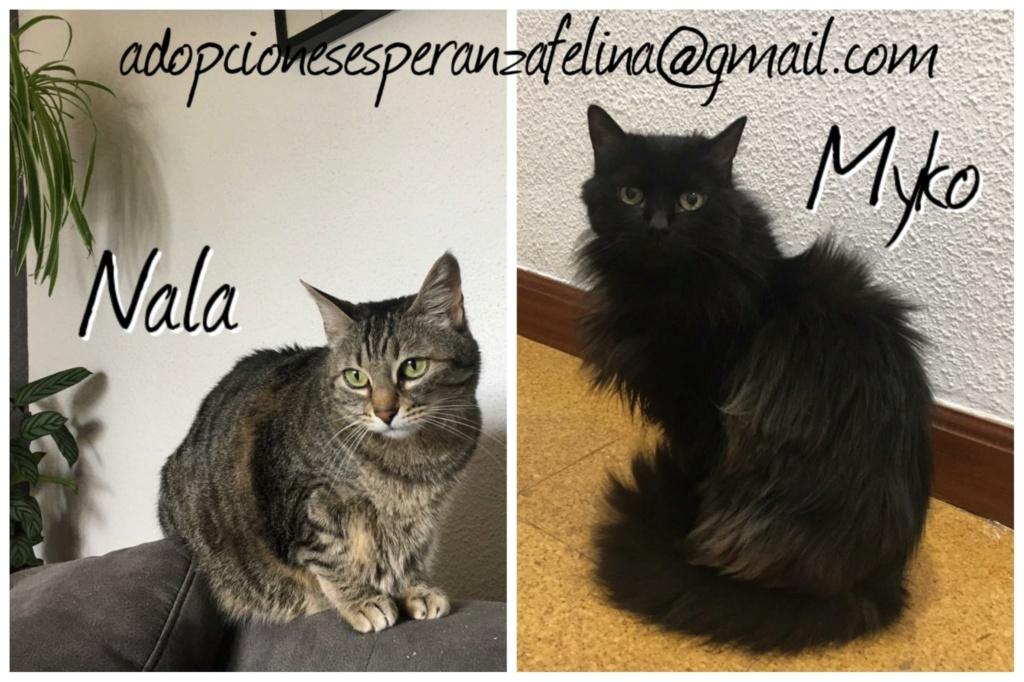 Myko y Nala, preciosas peques en adopción. Álava-España (F.N: 22/01/07 y 28/04/11) Whatsa72