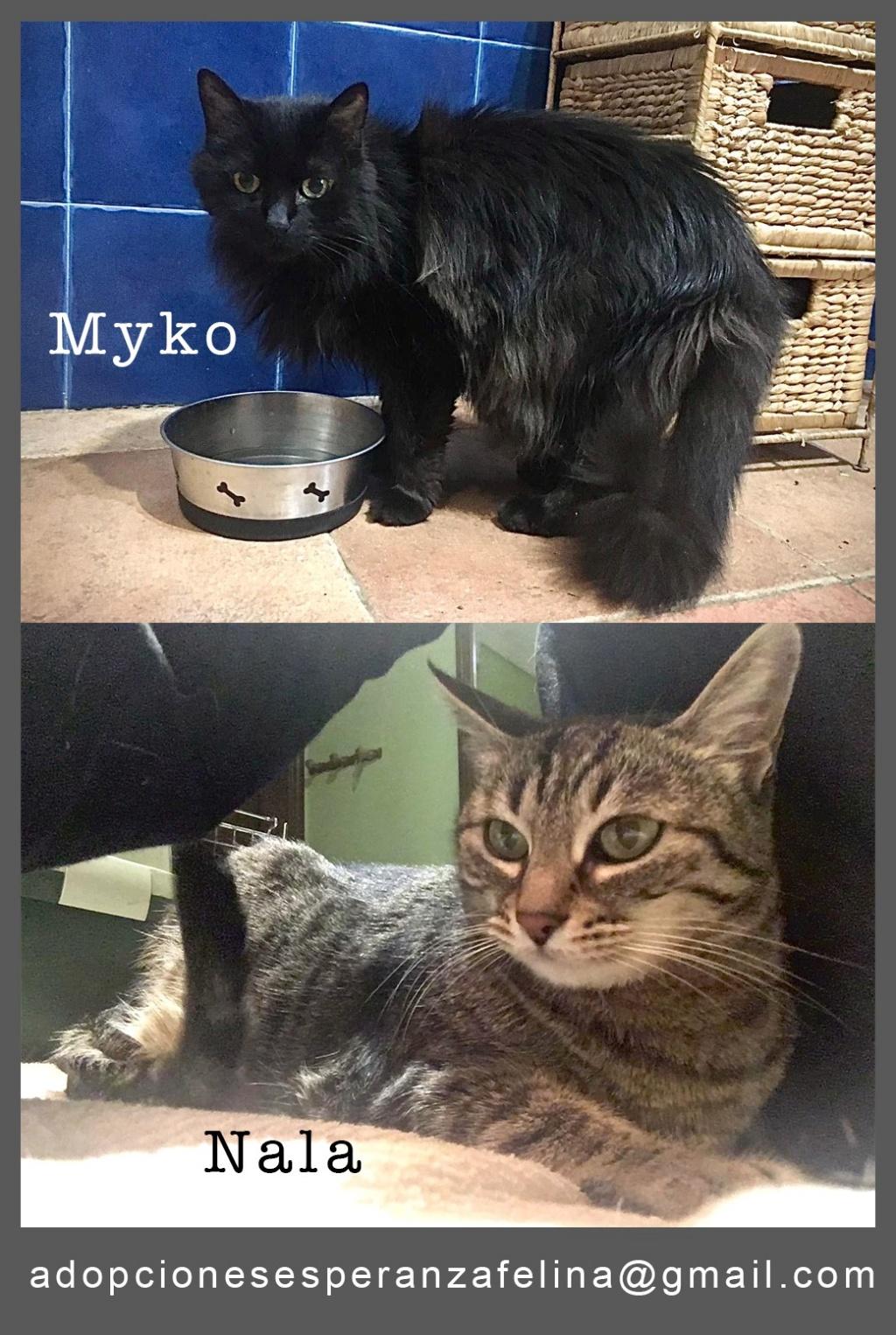 Myko y Nala, preciosas peques en adopción. Álava-España (F.N: 22/01/07 y 28/04/11) Whatsa76