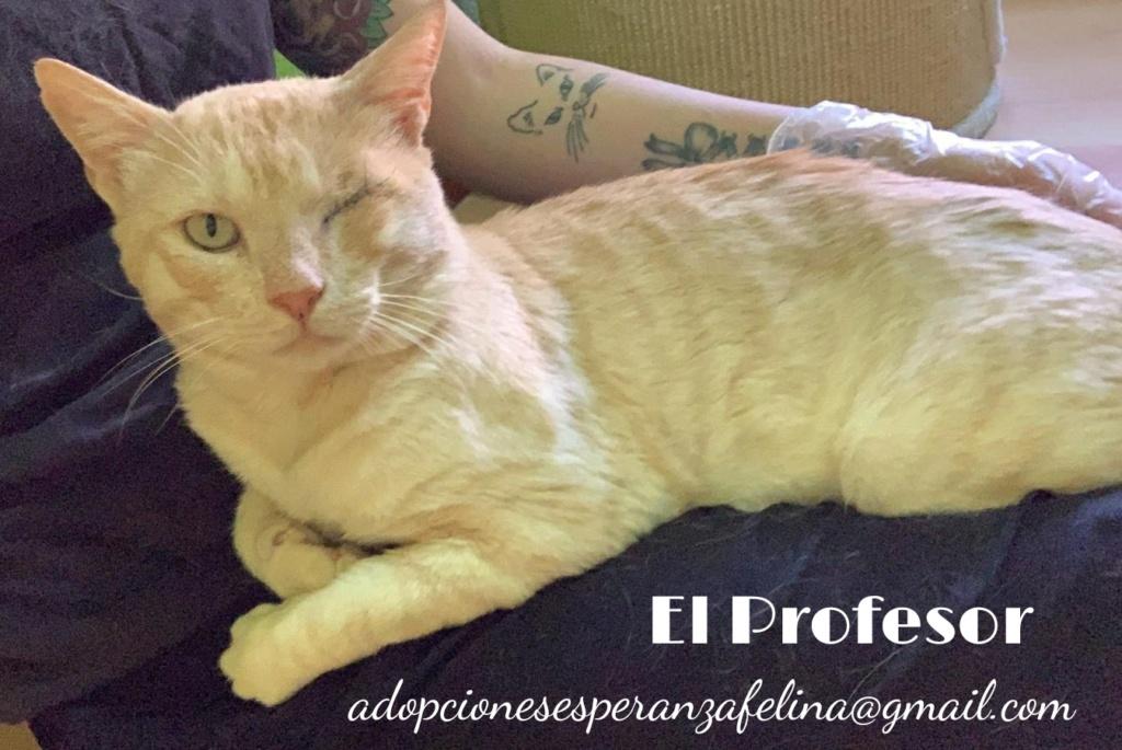 El Profesor en adopción (F.N aprox 01/05/2016. Álava, España) (Positivo a inmuno)  Whatsa81