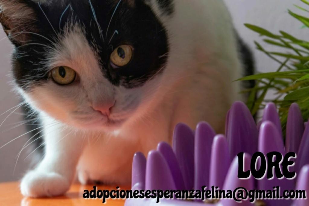 Lore, preciosa vaquita luchadora en adopción (Álava, F.N aprox. 2/04/12) - Página 2 Whatsa82