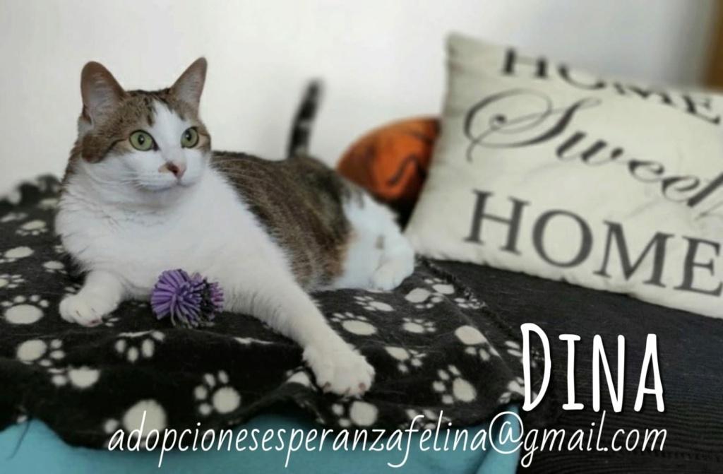 Dina, preciosa gata busca su hogar (Álava, fecha de nacimiento aproximada 10/04/2014 ) - Página 2 Whatsa89