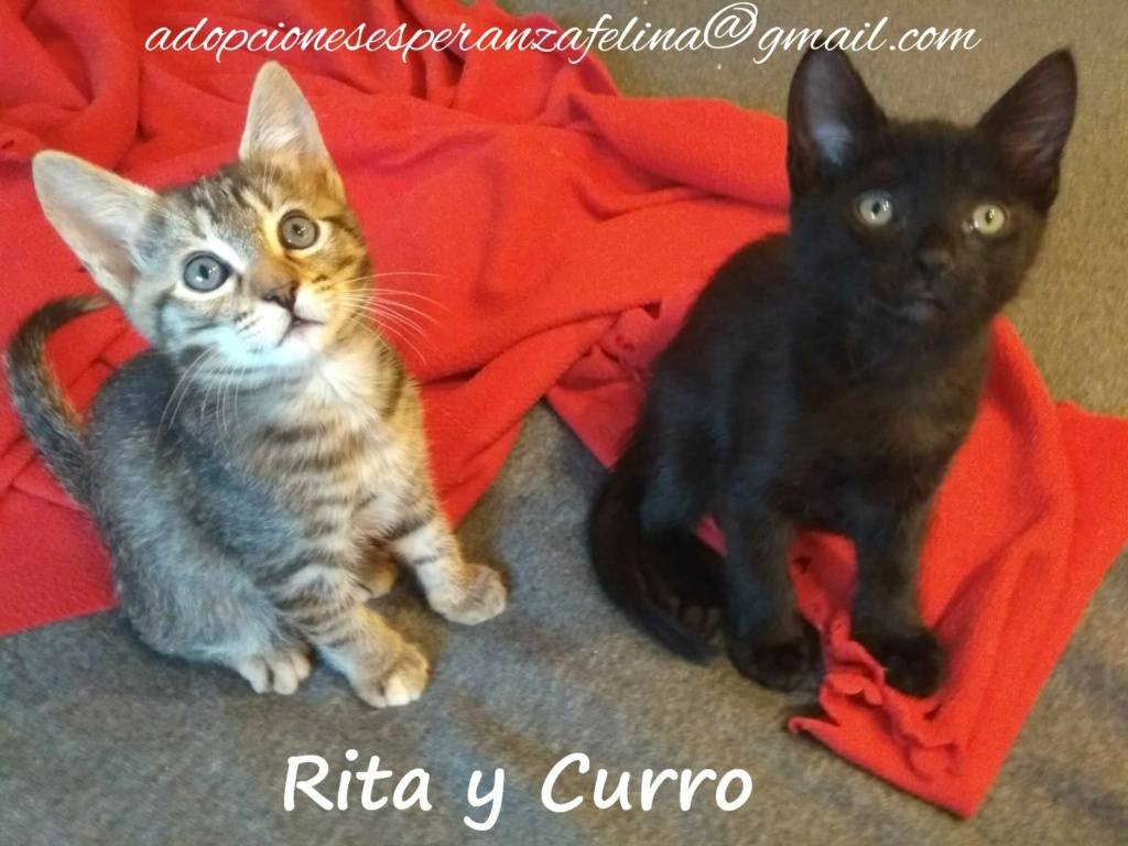 Rita y Curro, cachorritos en adopción. Álava-España (F.N. aprox. 15/07/2020) Whatsa91