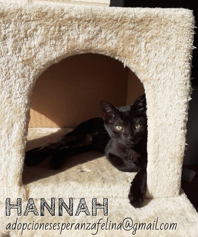 Hannah, preciosa gatita (F.N Aprox: 24/07/2020) Whatsa93