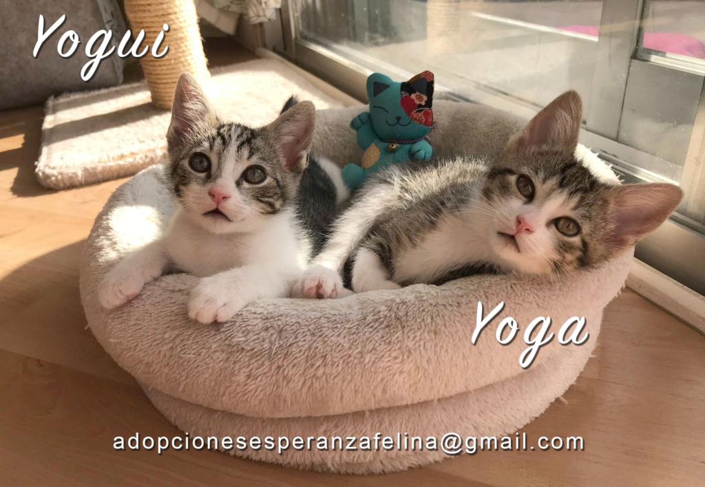 Yoga y Yogui adorables cachorritos en adopción (FN: 27/04/20) Yogui_10