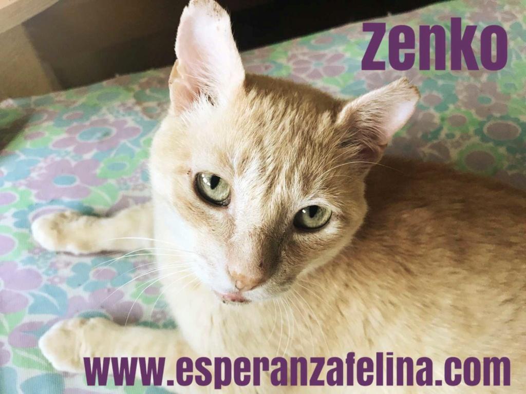 Zenko, precioso rubio en adopción. (F.N aprox: 15/01/2013) (Positivo a inmuno) Álava. Zenko10