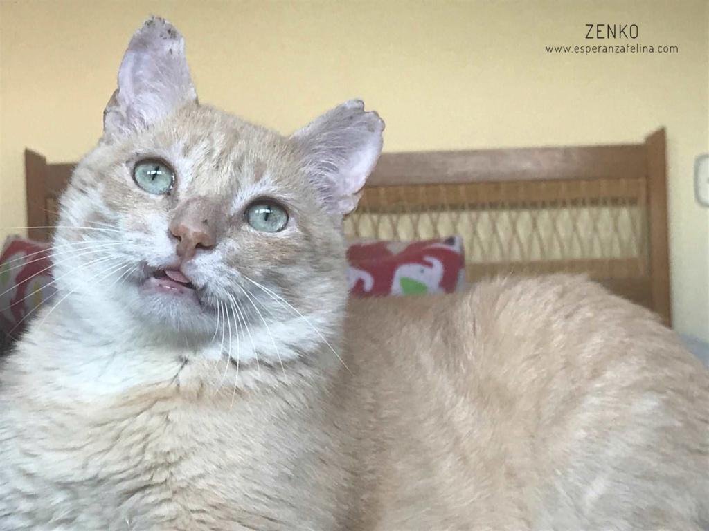 Zenko, precioso rubio en adopción. (F.N aprox: 15/01/2013) (Positivo a inmuno) Álava. Zenko_10