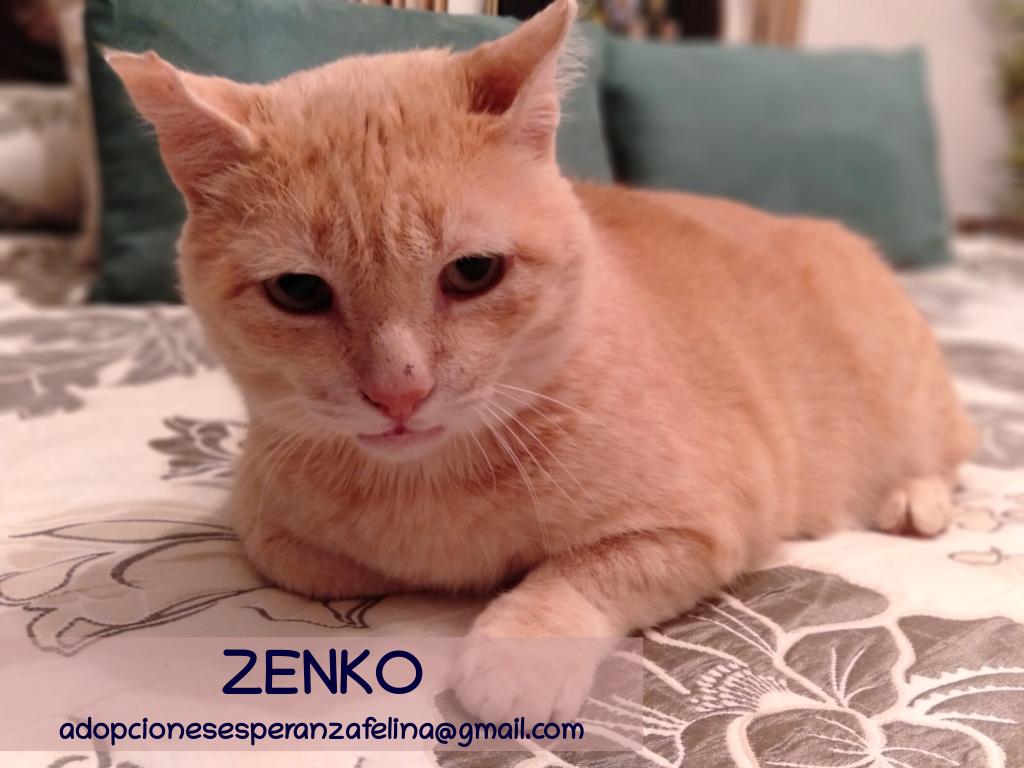 Zenko, precioso rubio en adopción. (F.N aprox: 15/01/2013) (Positivo a inmuno) Álava. - Página 2 Zenko_17