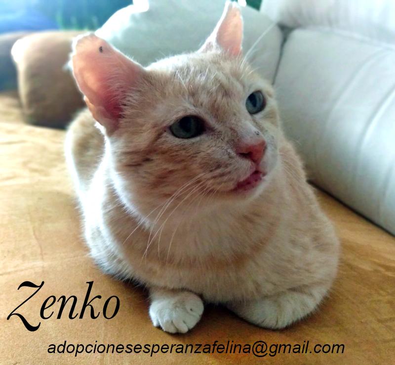 Zenko, precioso rubio en adopción. (F.N aprox: 15/01/2013) (Positivo a inmuno) Álava. - Página 2 Zenko_19
