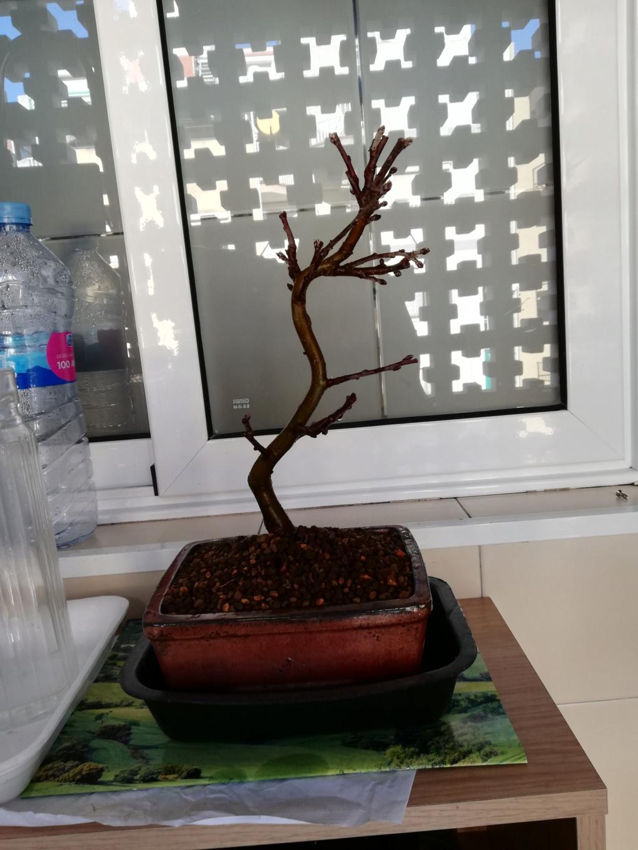 Duda con el trasplante de mi manzano Img_2016