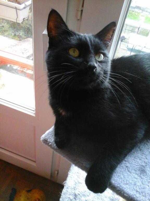 JUNGLE, mâle, noir, yeux verts, type européen, né le 9 Août 2014 20181111