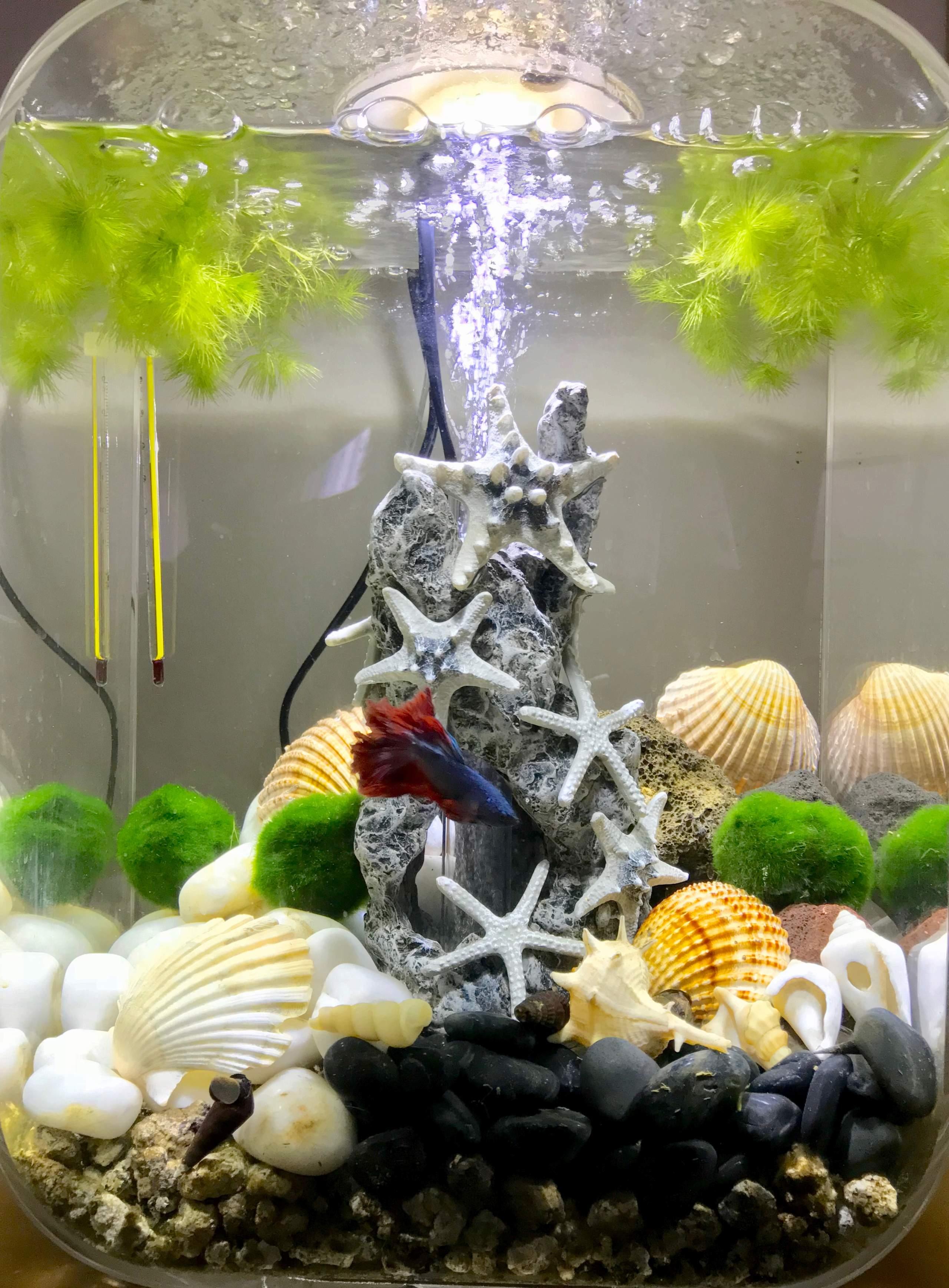 Mon premier aquarium, mon premier Betta :-p Img_0610