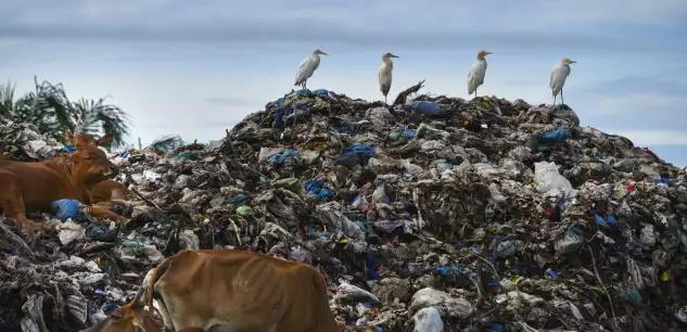 L'Indonésie renvoie cinq conteneurs de déchets aux Etats-Unis 0f8f1410
