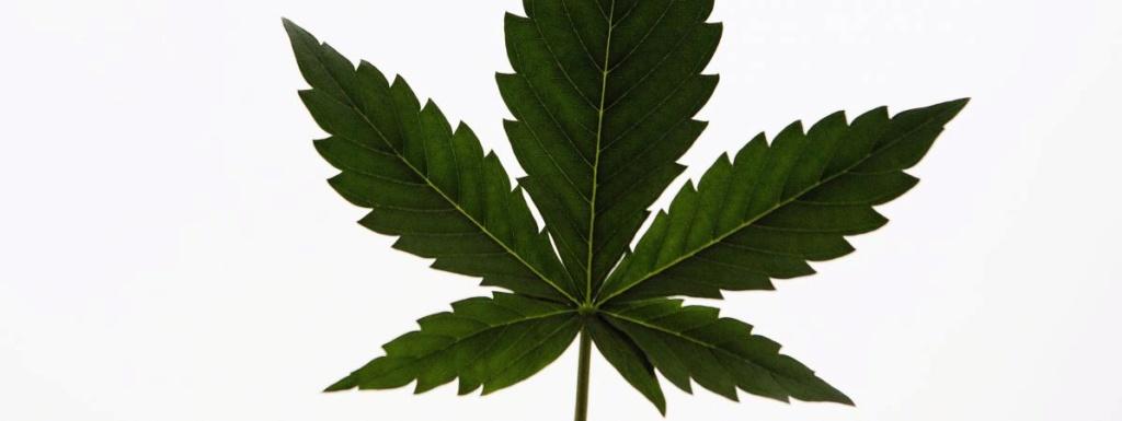 L'Assemblée nationale autorise une expérimentation du cannabis thérapeutique pour 2 ans 20300710