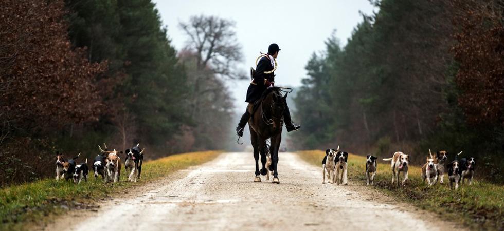 Femme tuée par des chiens : la Fédération nationale des chasseurs demande la suspension des chasses à courre 6612fm10