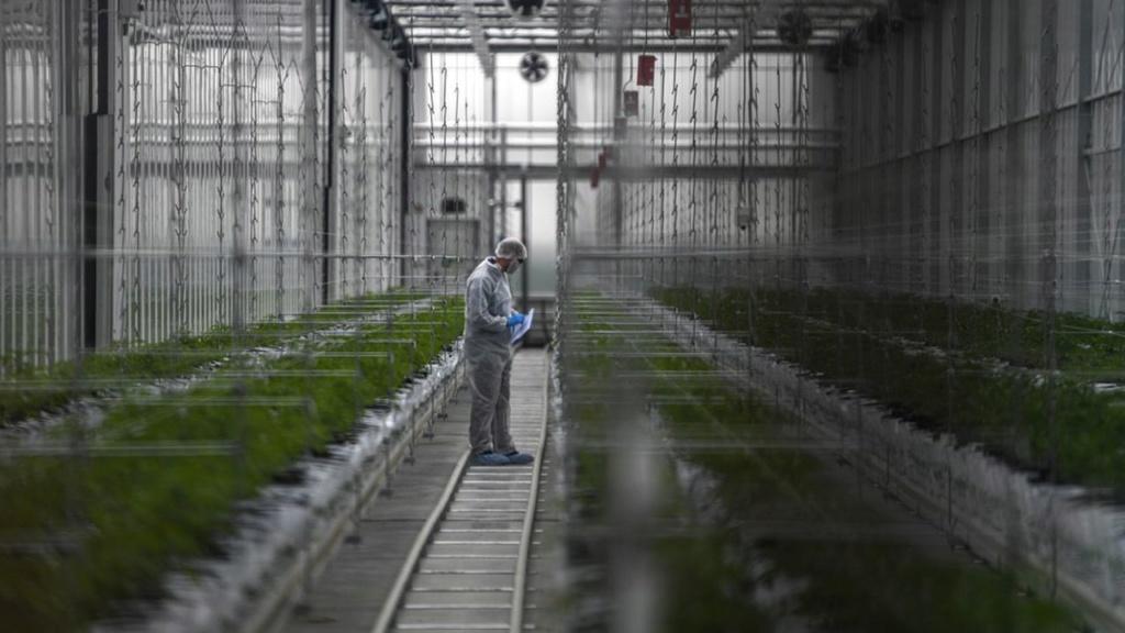 Le cannabis thérapeutique expérimenté en France dès 2020 Canna10