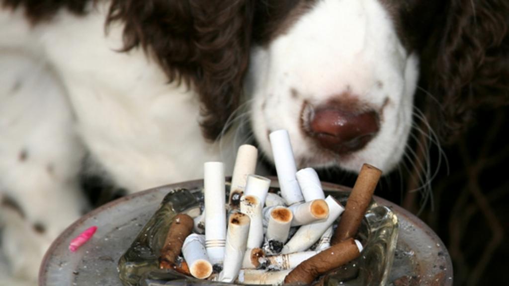 Des chiens sont-ils utilisés pour tester des cigarettes en laboratoire ? Chien-10