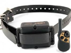 Collier à pointes et collier électrique Collie11