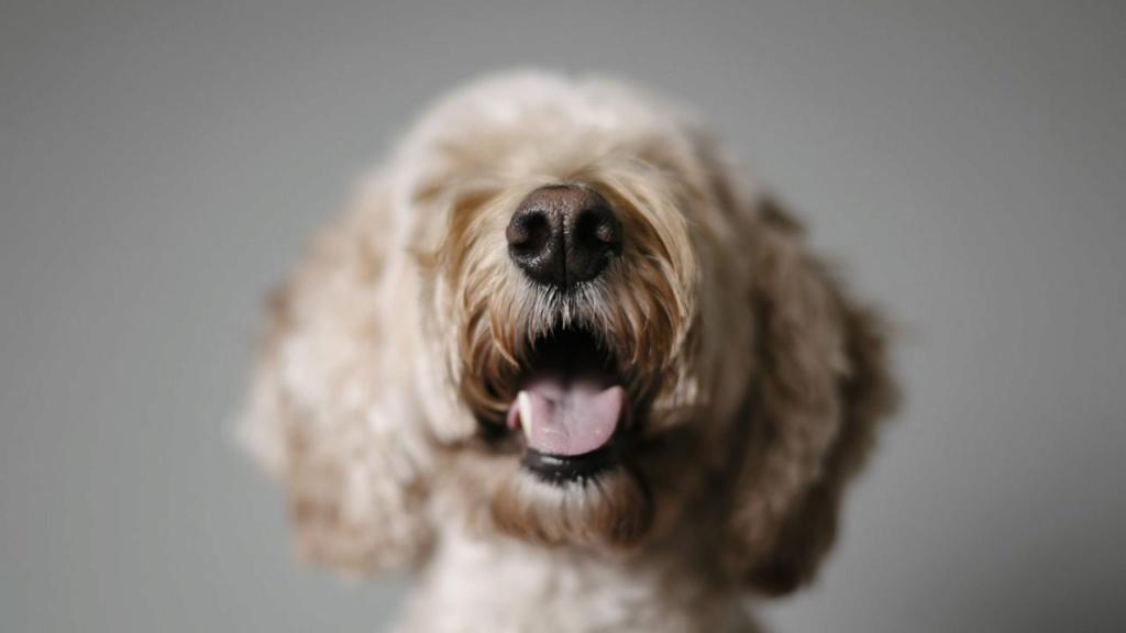 Belgique, Il sera désormais interdit d'expulser un locataire à cause de son animal de compagnie Eae77f10