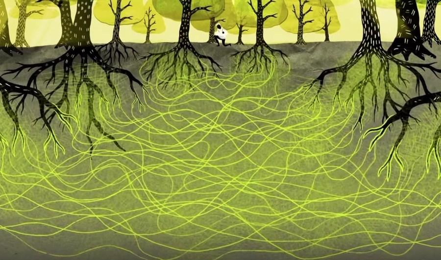 LANGAGE DES ARBRES : un réseau de communication et de défense très élaboré Forest10
