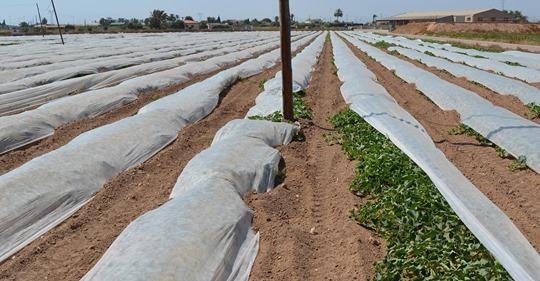 Chlorpyrifos : les dangers ignorés d'un pesticide toxique Safe_i26