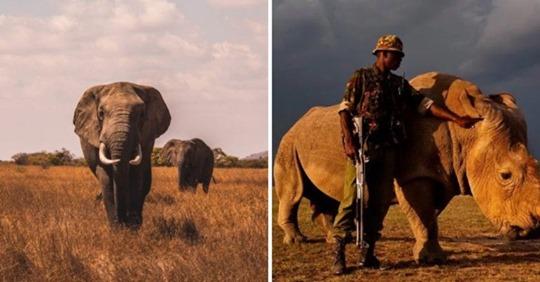 Le Kenya a décidé de punir de la peine de mort la chasse illégale d'animaux menacés d'extinction Safe_i30