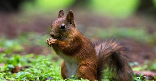 Il donnait de la meth à son écureuil pour en faire un animal d'attaque Safe_i39