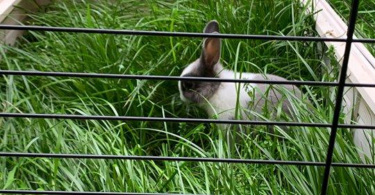 Contenus haineux : un député veut rajouter la censure des militants pour le droit des animaux Safe_i50