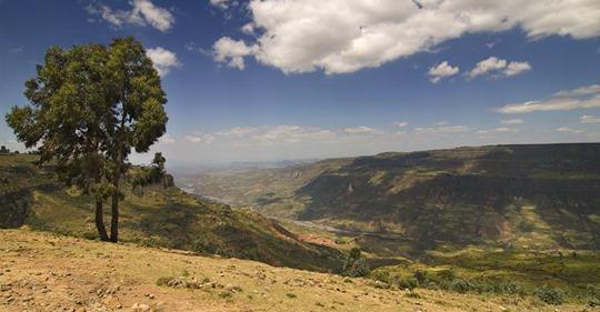 L'Ethiopie plante 350 millions d'arbres en un jour pour lutter contre la déforestation Safe_i54