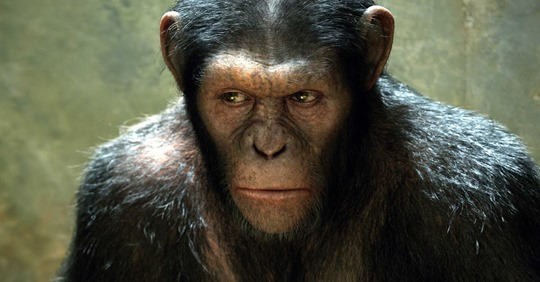 Des singes ont battu des humains à un jeu en étant bien plus intelligents et flexibles Safe_i62