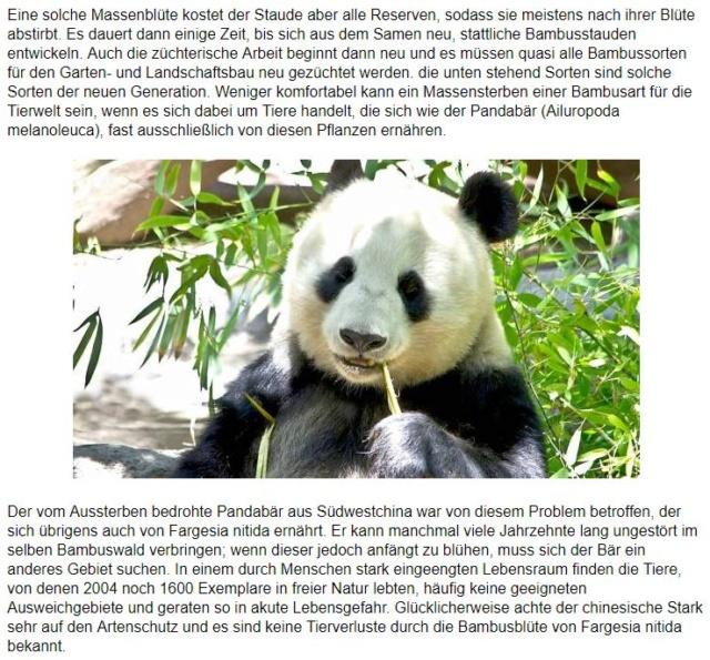 Panda-Bären Panda10