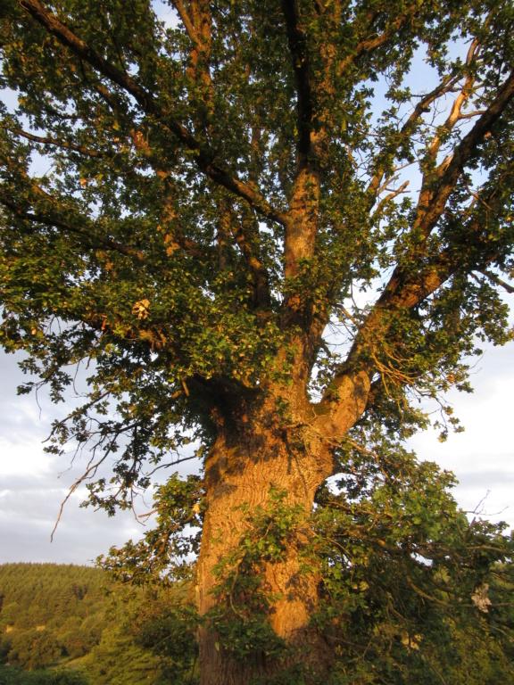 Des arbres , pour l'Arbre . - Page 2 Red_0332