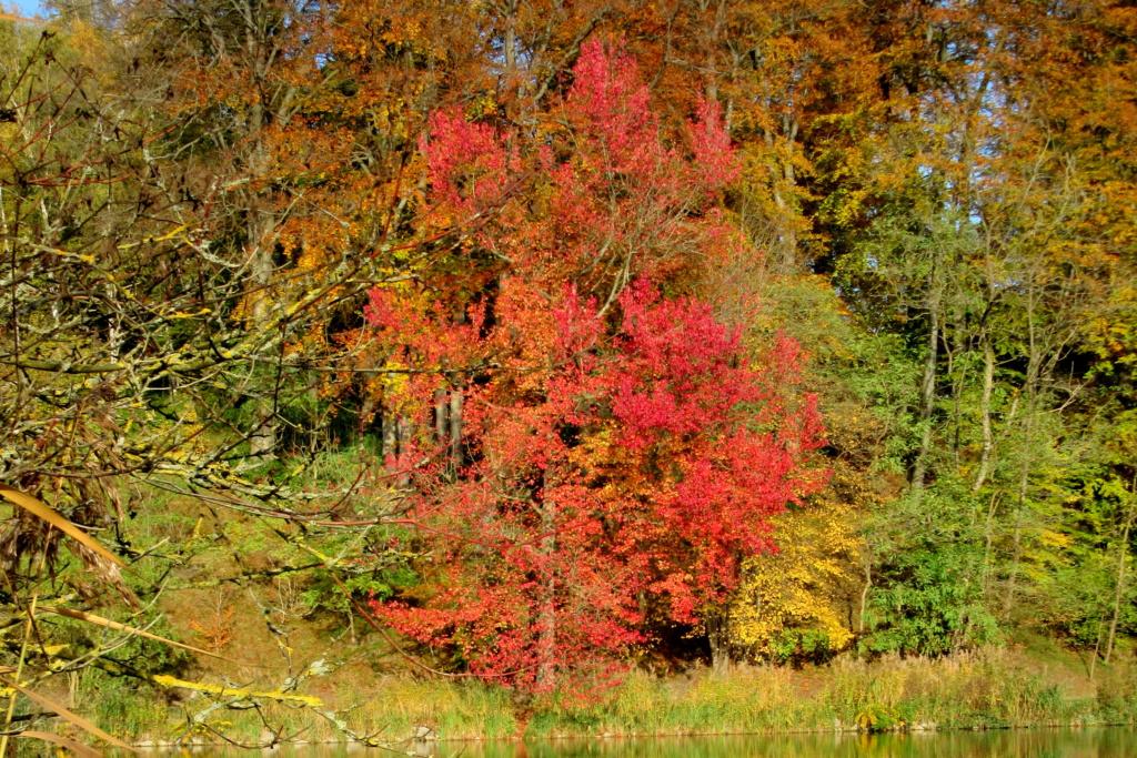 Des arbres , pour l'Arbre . - Page 2 Red_0341
