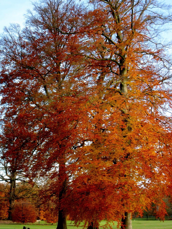 Des arbres , pour l'Arbre . - Page 3 Red_0412