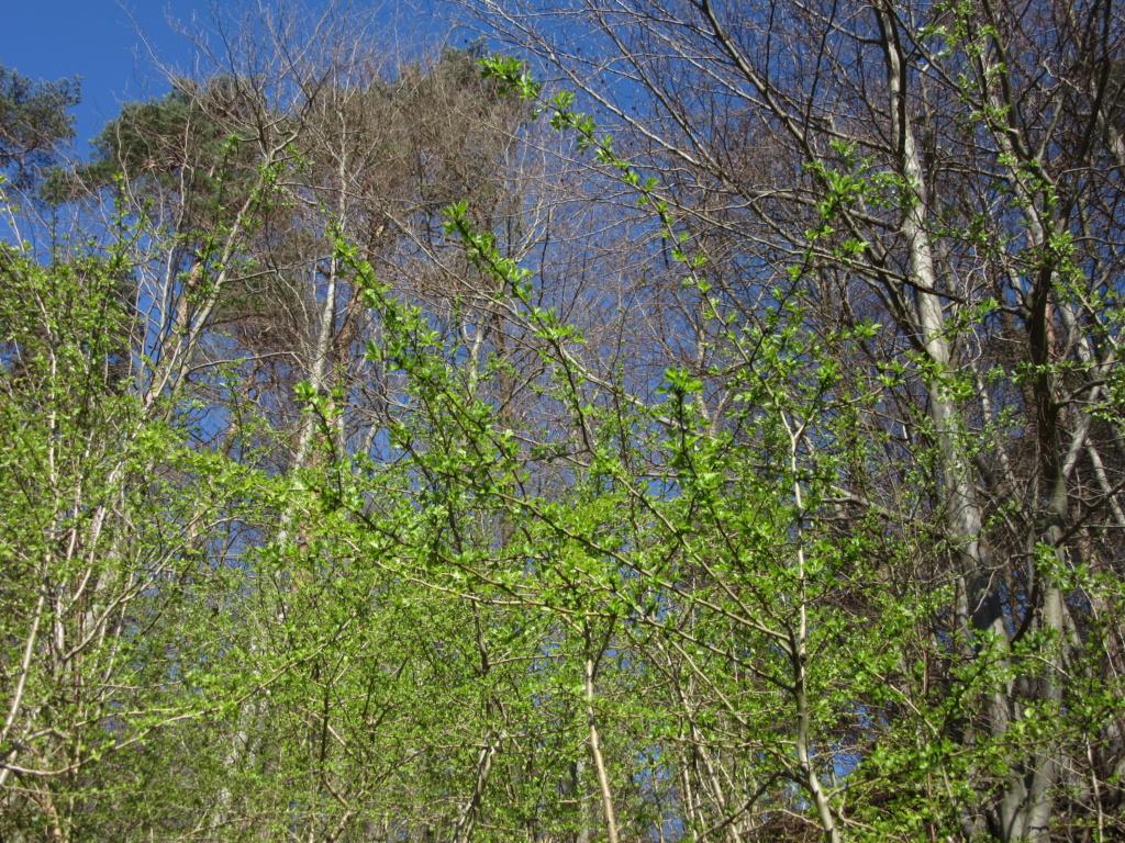 Des arbres , pour l'Arbre . - Page 3 Red_0512